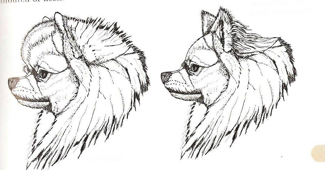 Kennel Z Malebneho Povltavi Pomeranian Offer